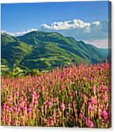 Umbria Canvas Print