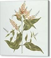 Umtar - Buddleia Polystachya Canvas Print