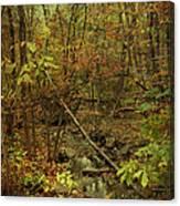 Unami Creek Feeder Stream In Autumn - Green Lane Pa Canvas Print