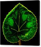 Under Leaf Canvas Print
