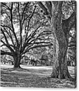 Under The Oaks Canvas Print