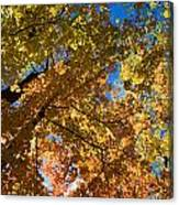 Underside Of Fall Canvas Print