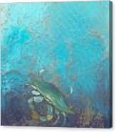 Underwater Blue Crab Canvas Print