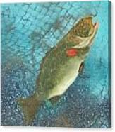 Underwater Grouper Canvas Print