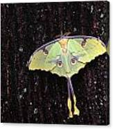 Unique Butterfly Resting On Tree Bark Canvas Print