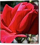 Unrolling The Red Carpet Canvas Print