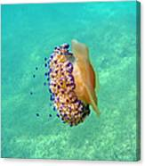 Unwelcome Jellyfish Canvas Print