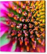 Up Close With A Cone Flower Canvas Print
