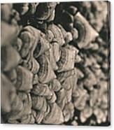 Up The Mushroom Tree Canvas Print