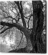 Up Tree Canvas Print