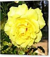 Upbeat Yellow Rose Canvas Print