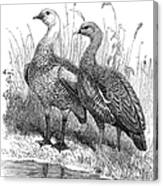 Upland Geese Canvas Print