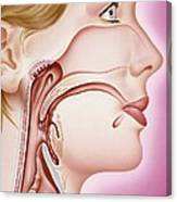Upper Respiratory Tract, Artwork Canvas Print