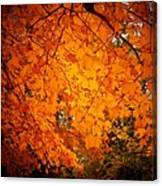 Upperville Leaves Canvas Print