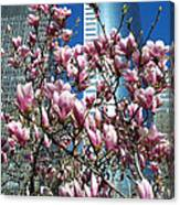 Urban Dogwoods Canvas Print
