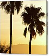 Usa, California, Palm Springs, Palm Trees Silhouetted At Sunset Canvas Print