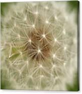 Usa, Pennsylvania, Close-up View Of Dandelion Canvas Print