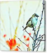 Valentine Sparrow  Canvas Print