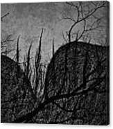 Valley Of Sticks Canvas Print