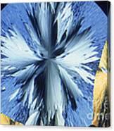Vanillin Crystals Canvas Print