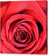 Vein Rose Canvas Print