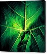 Veins Of A Sycamore Leaf Canvas Print