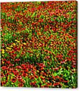 Velvet Spring Canvas Print