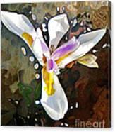Venice Iris Canvas Print