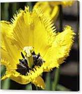 Venus Flytrap Tulip Canvas Print