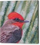 Vermillion Flycatcher Canvas Print