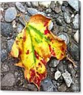 Vermont Foliage - Leaf On Earth Canvas Print