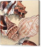 Vertical Conch Shells Canvas Print