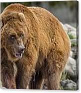 Very Big Bear Canvas Print