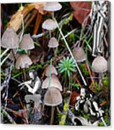 Very Tull Mushrooms Canvas Print