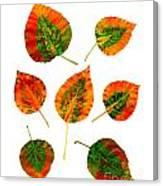 Vibrant Autumn Leaves Canvas Print