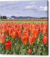 Vibrant Orange Spring Canvas Print