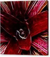Vibrant Succulent  Macro Canvas Print