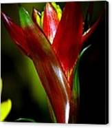 Vibrantly Rich In Red Canvas Print