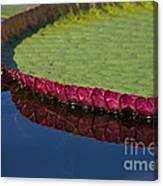 Victoria Amazonica Leaf Canvas Print