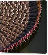 Victoria Amazonica Leaf Vertical Canvas Print