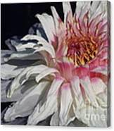 Victoria Water Lily Canvas Print