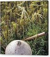 Vietnamese Conical Hat And Rice Cutting Canvas Print