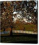 View Of A Large Sycamore Tree And White Canvas Print