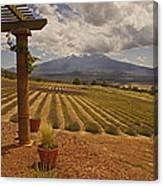 View Toward Mt Shasta Horizontal Canvas Print