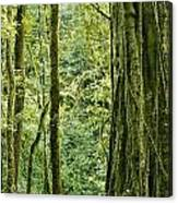 View Within A Rain Forest Canvas Print