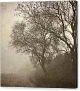 Vigilants Trees In The Misty Road Canvas Print