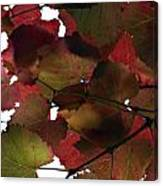 Vine Leaves Canvas Print