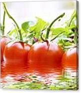 Vine Tomatoes And Salad With Water Canvas Print