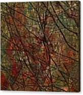Vines And Twines  Canvas Print