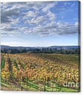 Vines In Fields Canvas Print